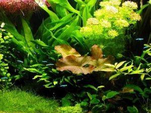 acuario holandés