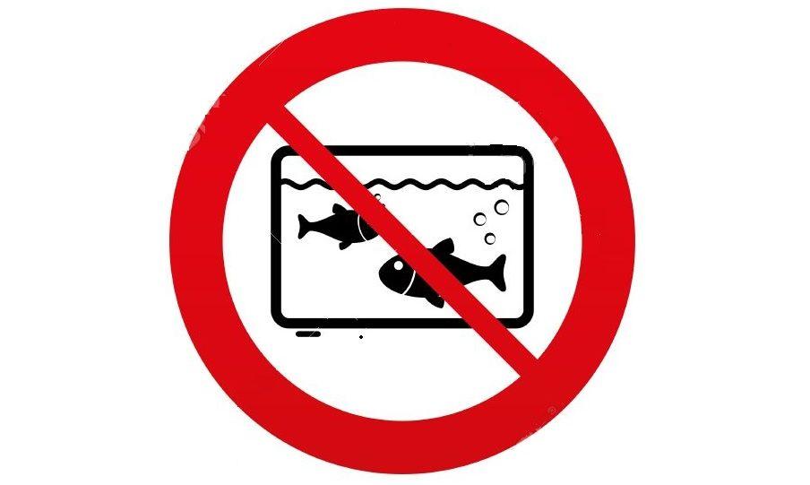 Errores al montar un acuario