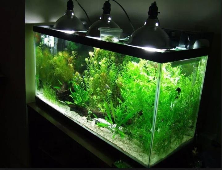 Luces para acuario