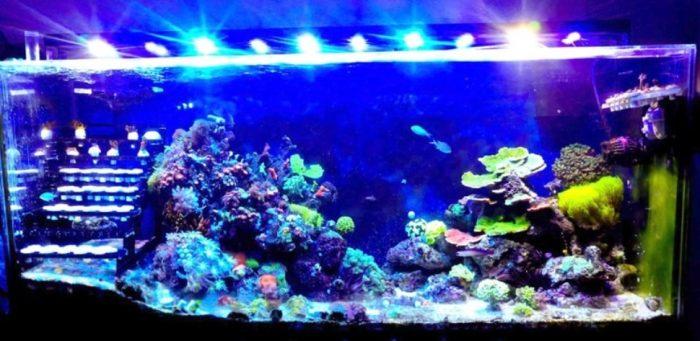 Iluminacion para peces